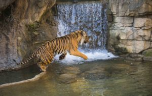 tiger waterfall Dumai