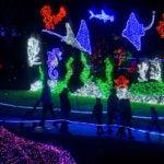 zoolights aquarium scene