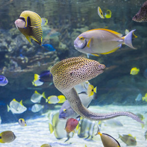 Eel, tropical fish and more in the Lagoon of the South Pacific Aquarium.
