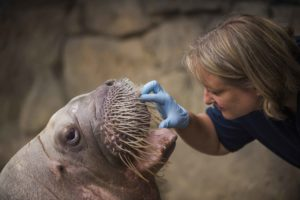 vet and walrus