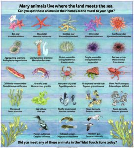 Tidal sea life art poster