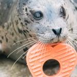 love at zoo seal