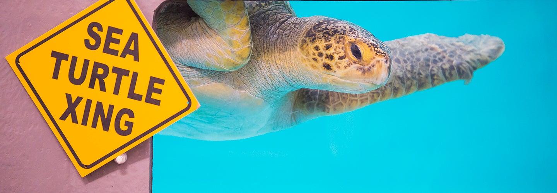 Flat Back Sea Turtle Endangered Species Pool Beach House Ocean Sculpture
