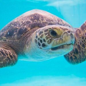 Sunny sea turtle