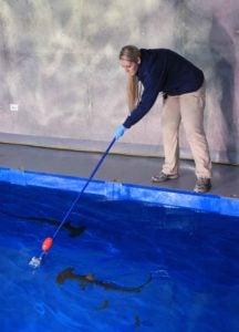 aquarist target feeding hammerheads2