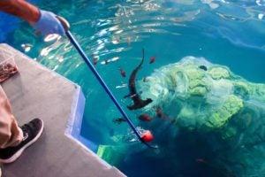 target feeding hammerhead sharks