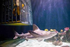 discounted shark dives
