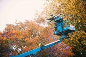 zoolights flame tree lift
