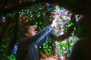 zoolights prep trees close