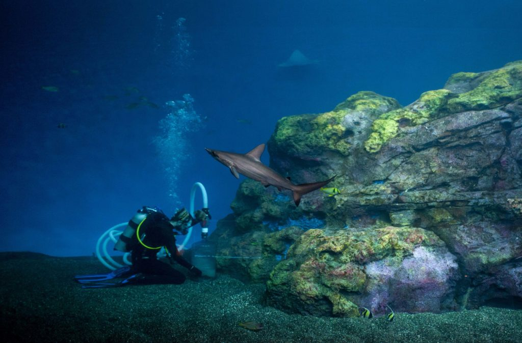 Diver and shark in Baja Bay