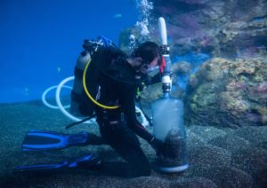Diver vacuums in Baja Bay