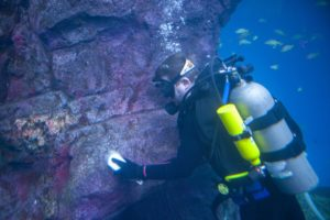 diver cleaning rockwork baja