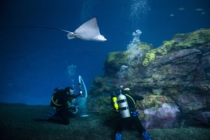 two divers and eagle ray