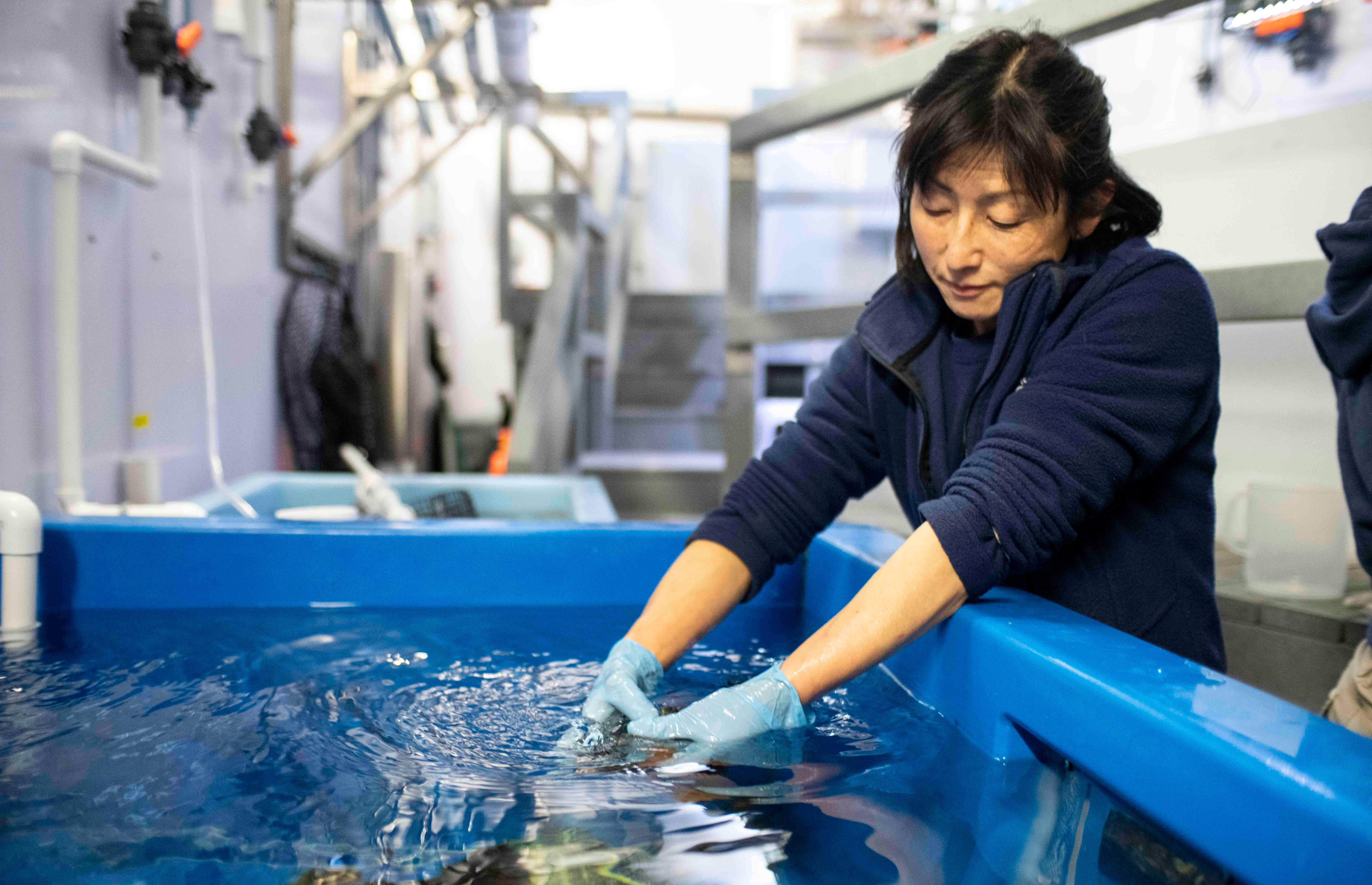 aquarist holding fish in tank