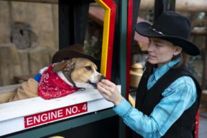 dog and keeper in train
