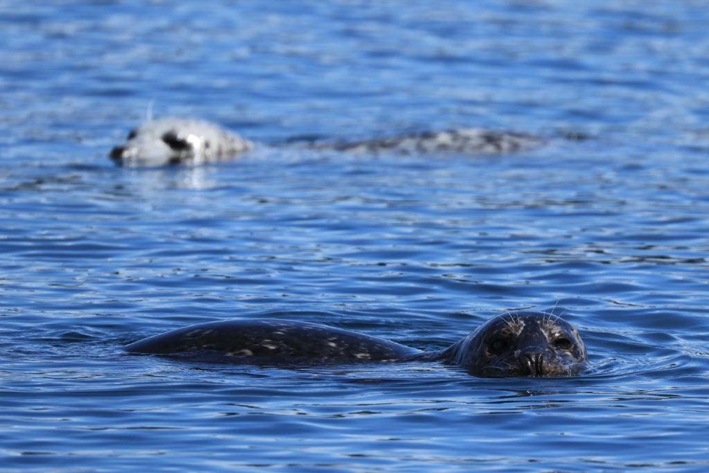 shoreline seals