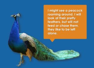 social story peacock