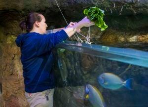 marine biologist feeding fish
