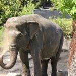 hanako elephant trunk splash