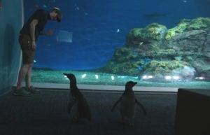 penguins in aquarium