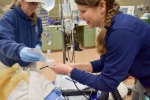 vet tech with polar bear