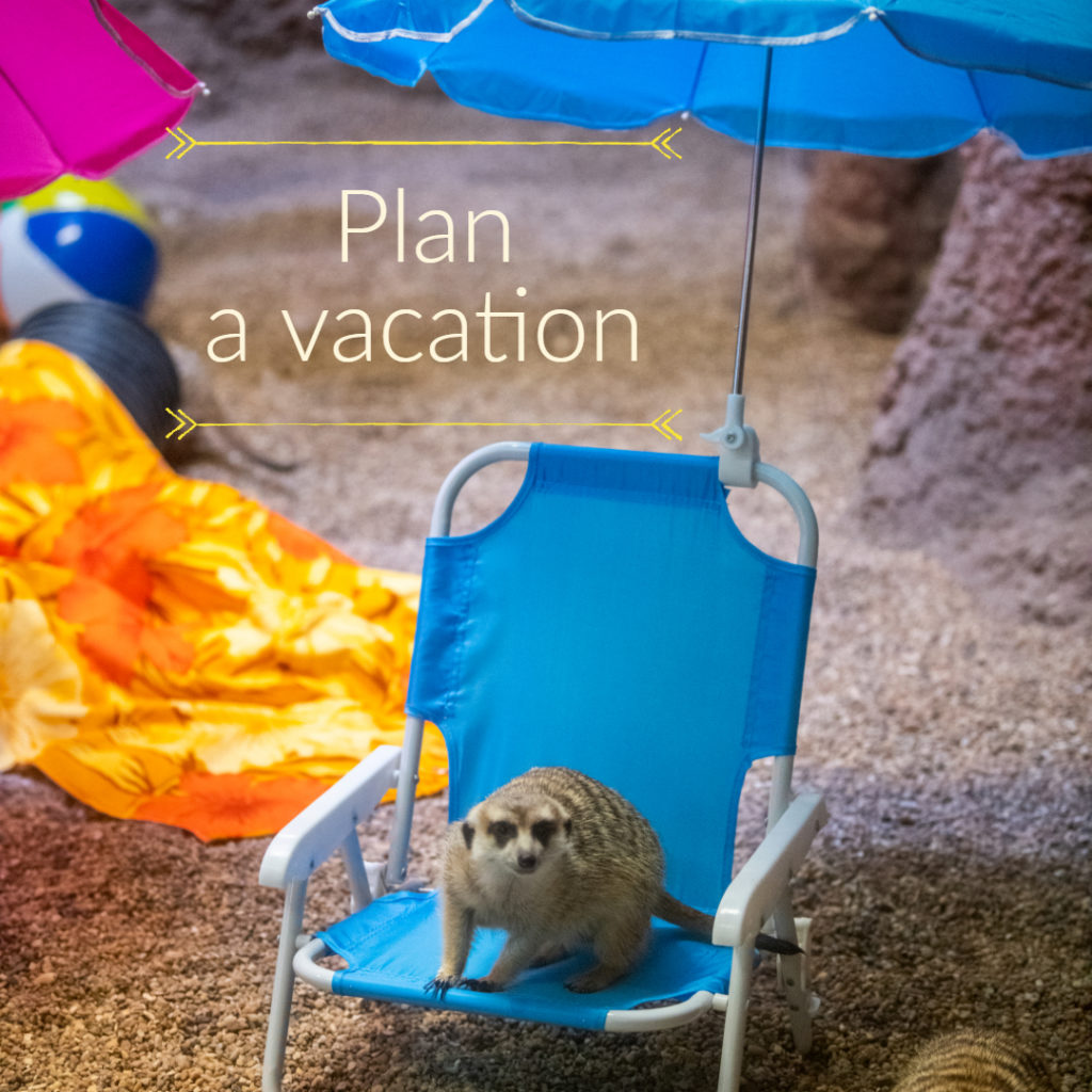 meerkat sitting on beach chair