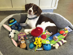 dog in basket with toys