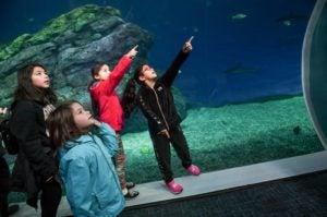 kids pointing in aquarium