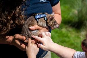 children petting rat