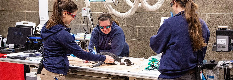 It's a boy: DNA tests determine sex of 'Happy Feet ... |Happy Feet Zoo Aquarium