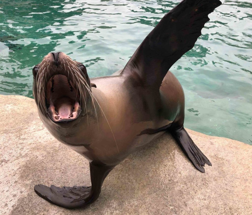 Sea lion training
