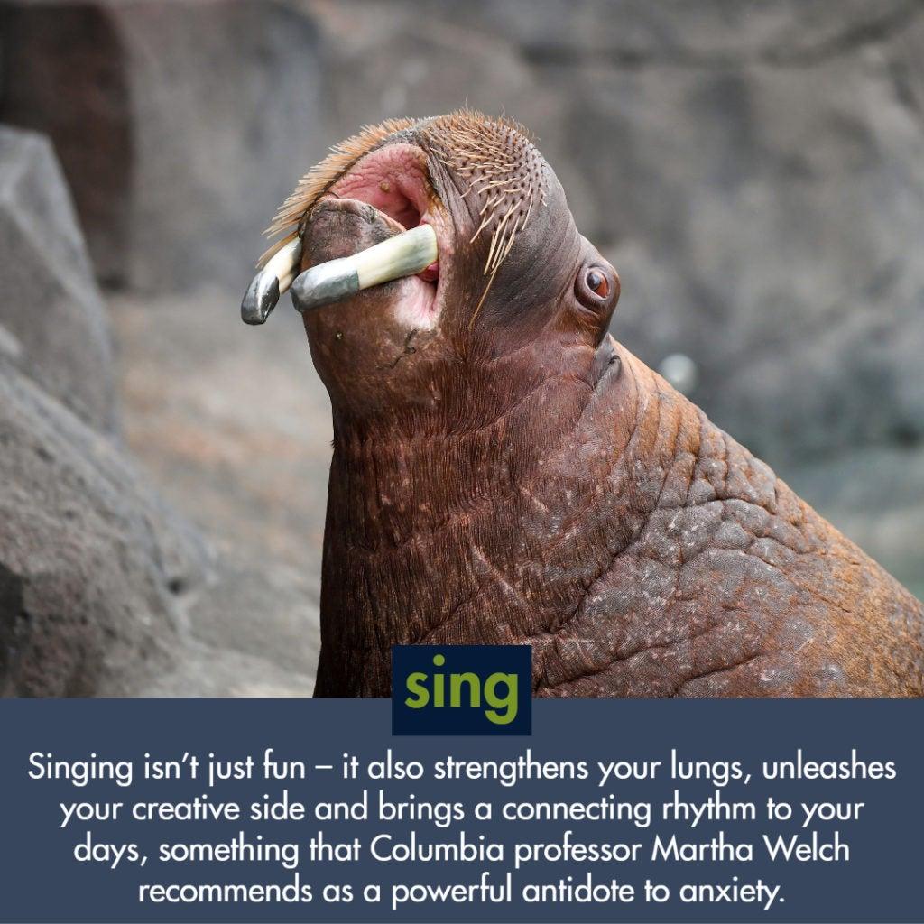 walrus singing