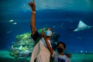 man boy masks pointing baja bay