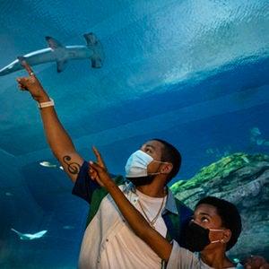 baja man boy pointing at shark