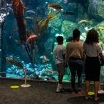 families distancing at aquarium