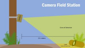 camera-trap-graphic