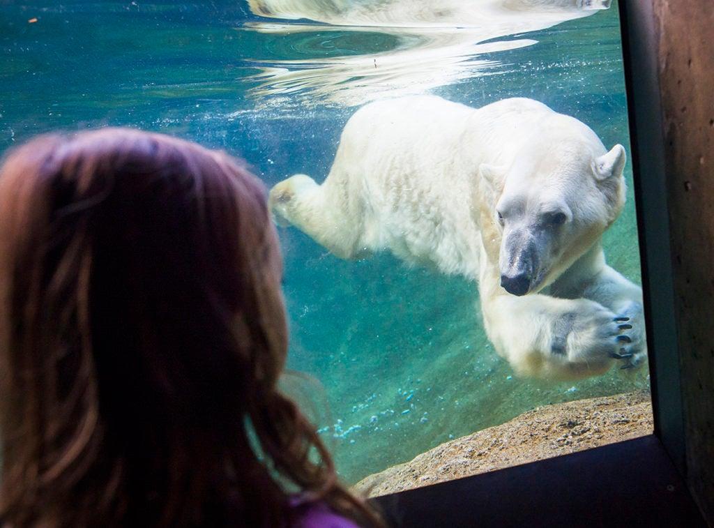 girl looking at polar bear in pool