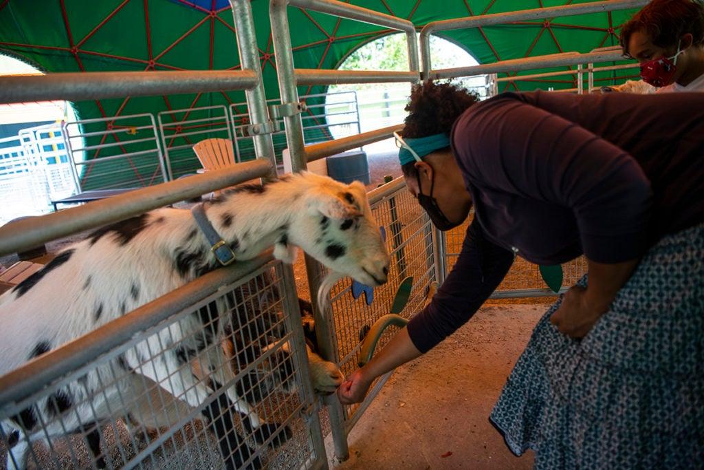 mom feeding goats