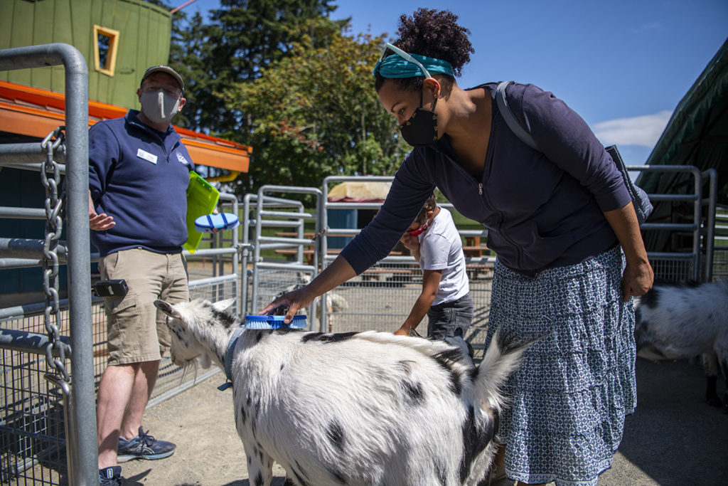 mom staff goat brushing