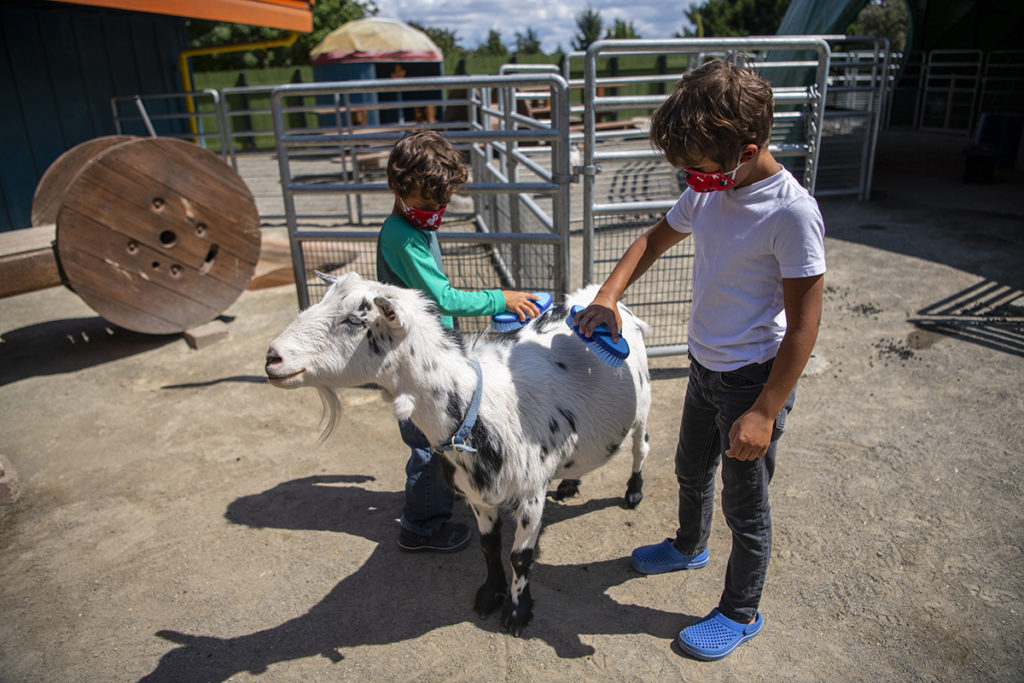 two boys goat grooming