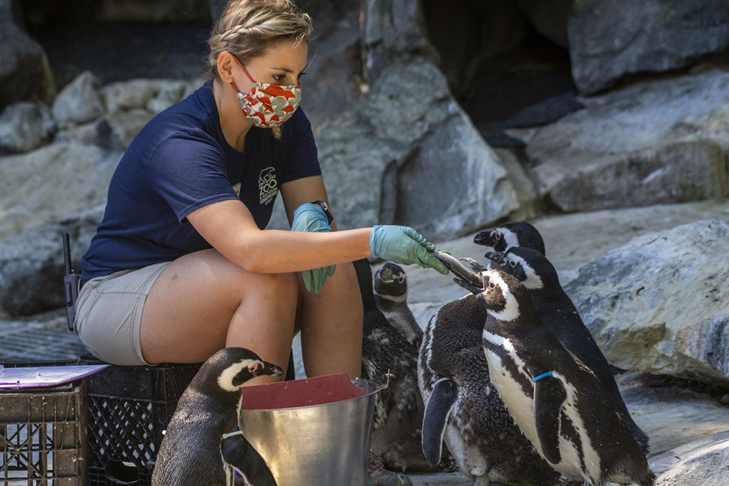 keeper mask feeding penguins
