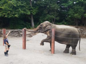 keeper and elephant