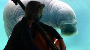 walrus music bass