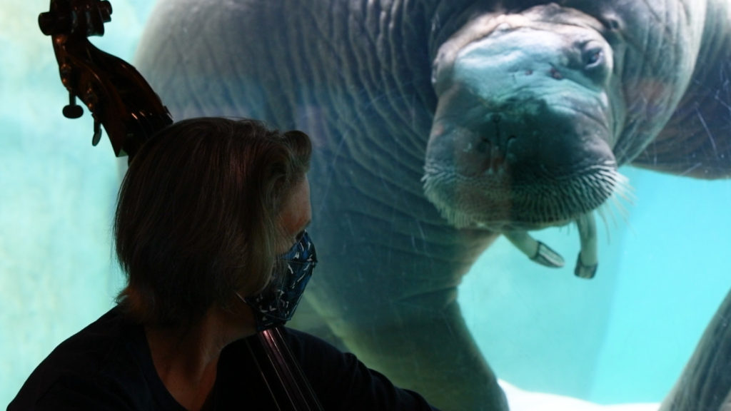 walrus and musician