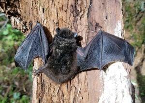 bat on tree