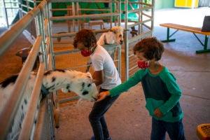 boys feeding goats zoolights