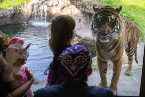 kids in masks with tiger