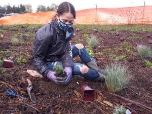 youth planting raingarden