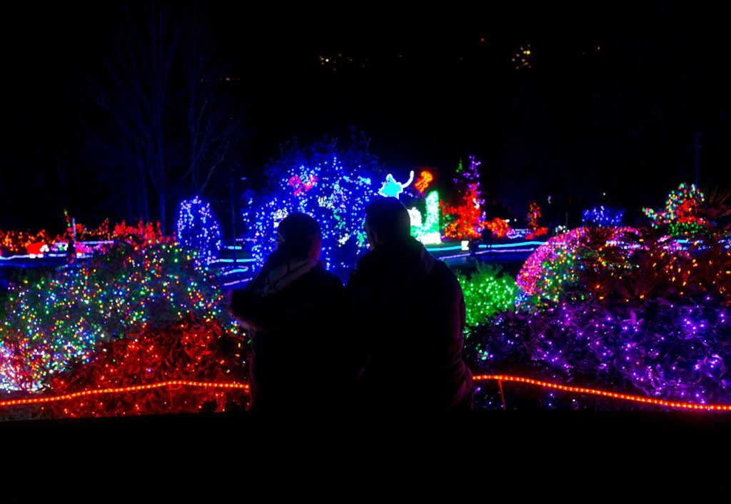 couple looks at zoolights