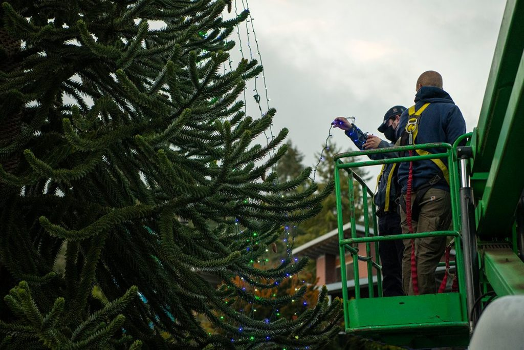 two men decorate tree with christmas lights
